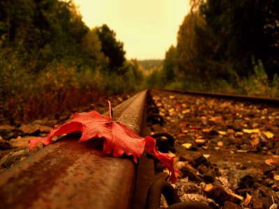 Leaf on Railroad
