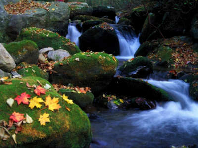 Cascade And Autumn Leaves Great Smoky Mountains National Park Tennessee