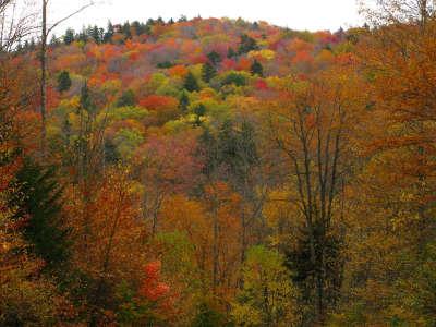 Autumn Colors Mountains