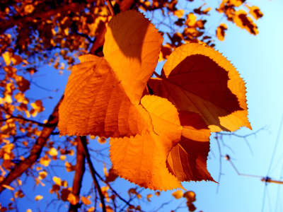 Autumn Leaves Desktop Wallpaper 12923
