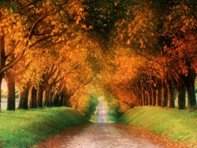 Autumn Road Cognac Region France