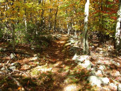 Mountain Forest Trail Autumn