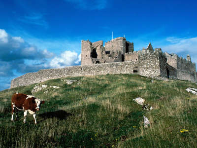 Cashel Castle Ireland and One Cow