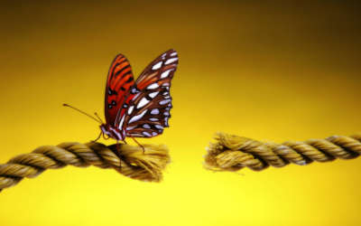 A Butterfly Landing On A Cut Rope