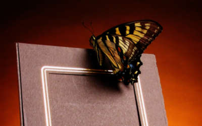 A Butterfly Landing On A Photo Frame