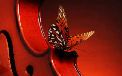 A Butterfly Landing On A Violin