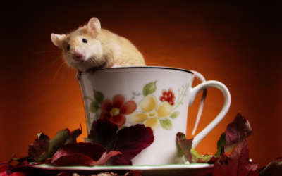 A Mouse Coming Out From A Cup
