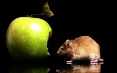 A Mouse Eating A Green Apple