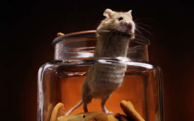 A White Mouse In A Cookie Jar