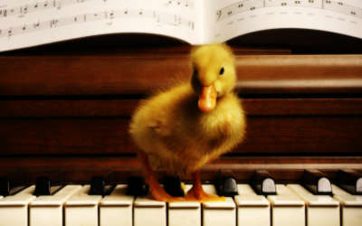 A Yellow Duckling On A Piano