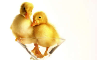 Two Yellow Ducklings Inside A Glass