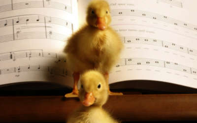 Two Yellow Ducklings Standing On The Piano
