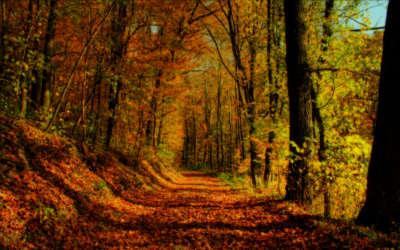 Autumn Forest Landscape Wallpaper