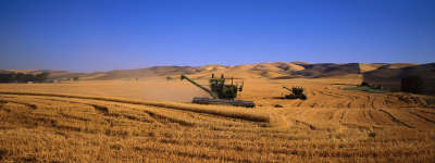 Wheat Field harvesting