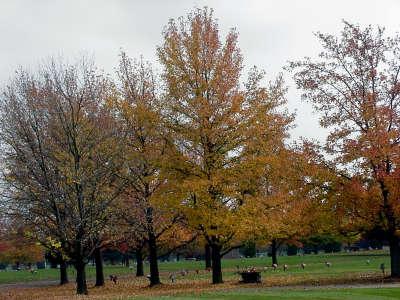 Autumn017