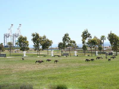 Park Cranes