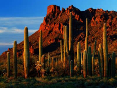 Alamo Canyon Organ Pipe Cactus National Monument Arizona