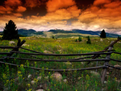 Fence on Meadow