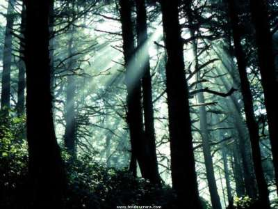 Forrest Sun