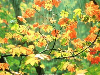 Raining in forrest