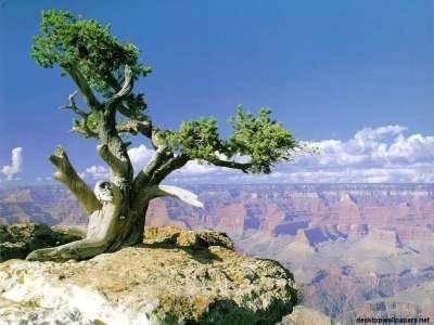Nature Tree on Rock