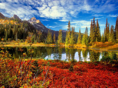 Autumn Time In Nature