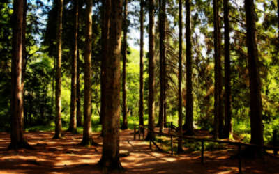Nature Forest And Trees