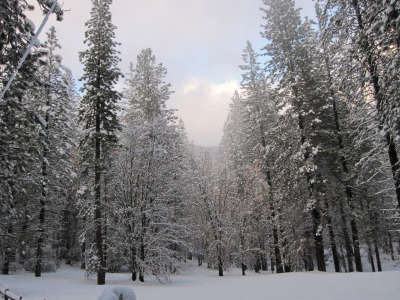 Winter Snow Nature025