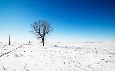 Winter Snow Nature042
