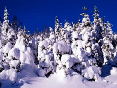 Winter Snow Nature053