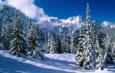Winter Snow Nature101