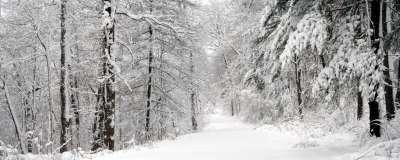 Winter Snow Nature102