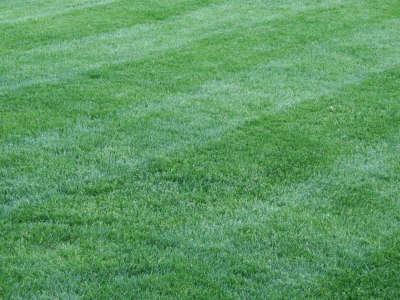 Grass Nature
