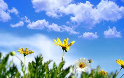 Flowers On Meadow Fields