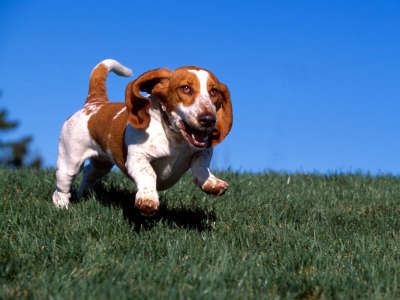 High On Life, Basset Hound