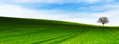 Grass Nature For Facebook Covers
