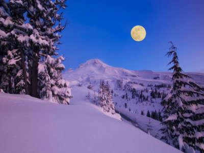 Winter Nature Snow Scene