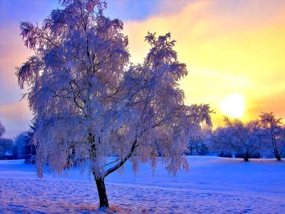 Winter Nature Sunset