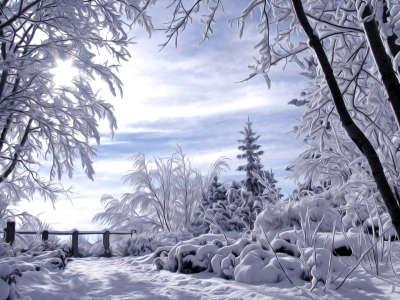 Winter Nature Snowing