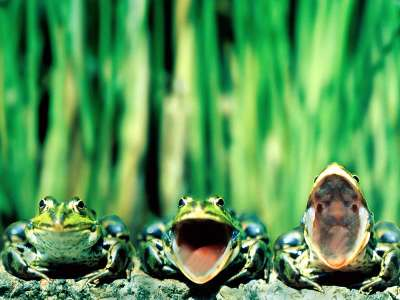 2 Frog