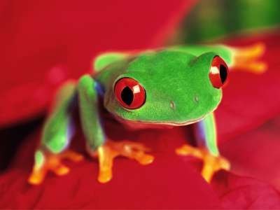 2 Frog