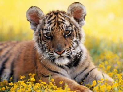 Animal Wallpapers Collection