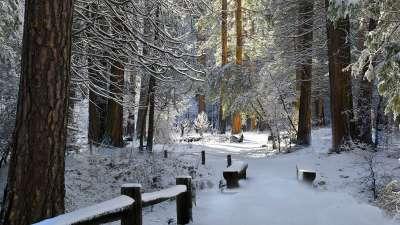 2 Winter Forrest