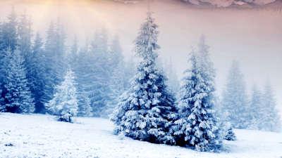 2 Winter Tree
