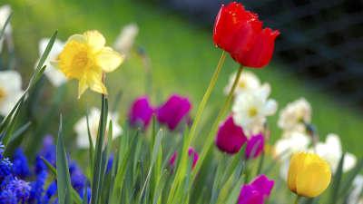 Nature Spring