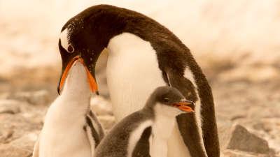 Antarctica Animal