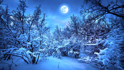 Winter Tres At Night