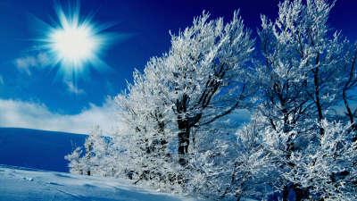 2 Winter Scene