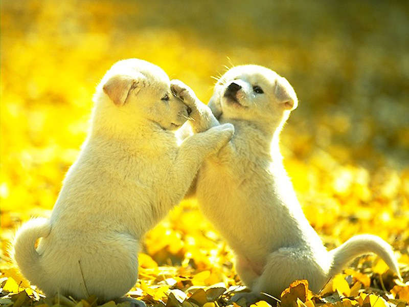 Tiny Baby Dogs are playing together